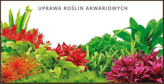 Uprawa roślin akwariowych