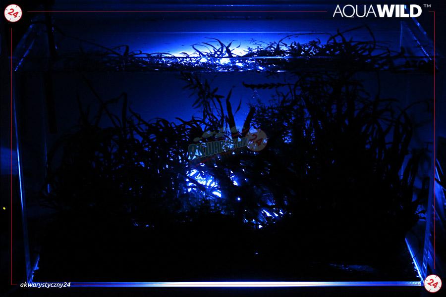 Aquawild Moon Led Niebieski Aqmledn1 Oświetlenie Nocne Do Akwarium Najwyższa Jakość