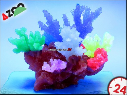 AZOO GLOWLIGHT CORAL (M) PURPLE (AZ27105)