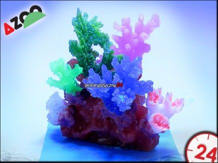 AZOO GLOWLIGHT CORAL (S) PURPLE (AZ27111)