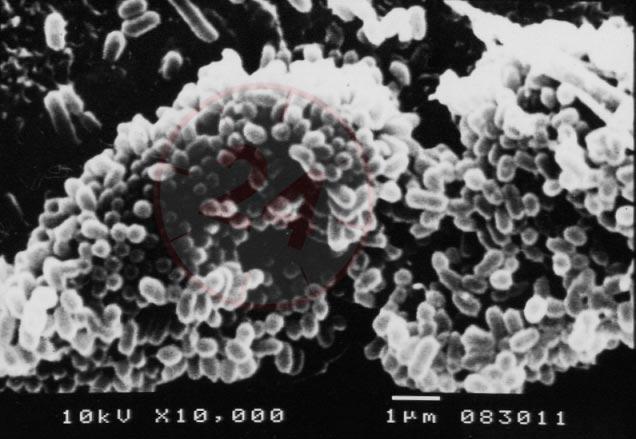 AZOO Active Filter Silver Ion (AZ16069) - Wkład wielozadaniowy zawierający srebro jonowe do eliminacji ryzyka wystąpienia patogenów u ryb