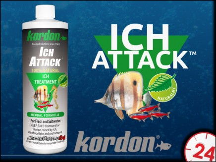 KORDON ICH ATTACK 473ml
