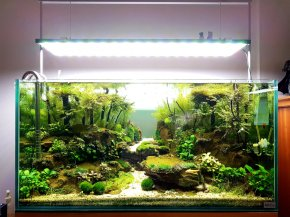 NuniQ WIDE LED 60 P (NQ60P) - Oświetlenie Led podwieszane do akwarium słodkowodnego, wymiary 560x190x17mm, do zbiornika 580 - 730mm