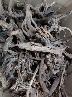 Duże korzenie MANGROWCA