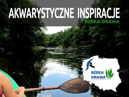 AKWARYSTYCZNE INSPIRACJE - RZEKA DRAWA 2013r