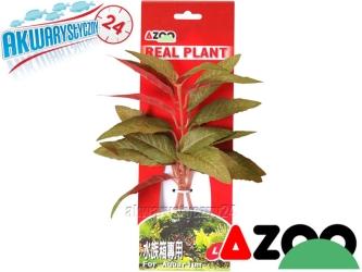 AZOO ALTERNATHERA GREEN L (22cm) (AZ98004) - Roślina sztuczna z tkanymi liśćmi