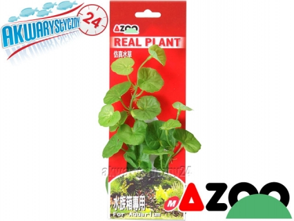 AZOO HYDROCOTYLE M (19cm) (AZ98011) - Roślina sztuczna z tkanymi liśćmi