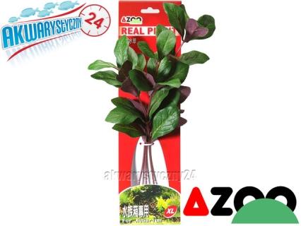 AZOO LOBELIA CARDINALIS XL (31cm) (AZ98023) - Roślina sztuczna z tkanymi liśćmi
