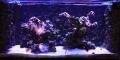 LUMINI (Uszkodzony 8) Glisten 150R2 - Oświetlenie do akwarium morskiego i rafowego