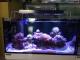 LUMINI (Uszkodzony 9) Glisten 150R2 - Oświetlenie do akwarium morskiego i rafowego