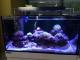 LUMINI (Uszkodzony 4) Glisten 150R2 - Oświetlenie do akwarium morskiego i rafowego