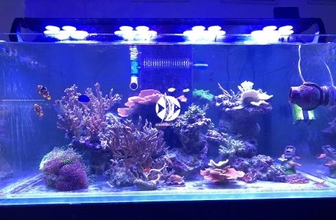 TRIPLE H CLX-3 - Oświetlenie do akwarium morskiego