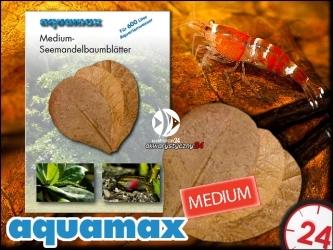 AQUAMAX Liście migdałecznika morskiego MEDIUM  (aquamax Terminalia Catappa Leaves) (007)