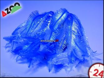 AZOO NEON CORAL (AZ27146) - CAULERPA SP.