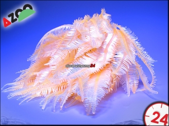 AZOO NEON CORAL (AZ27148) - CAULERPA SP.