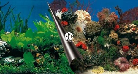 EBI Tło dwustronne Stone + Coral (241-108833) - Fototapeta do przyklejenia na tylną szybę akwarium.