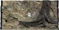 ATG Tło Standard (STD50x30) - Tło uniwersalne do akwarium, zawiera motywy skał i korzeni 100x60 cm