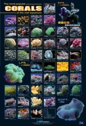 AZOO Plakat akwarystyczny Corals (AZ90151) - Plakat z Koralowcem