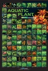 AZOO Plakat akwarystyczny Aquatic Plant (AZ90152) - Rośliny wodne