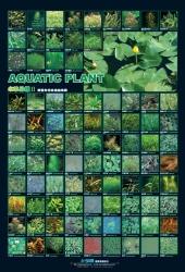 AZOO Plakat akwarystyczny AZ90163 Rośliny wodne 2