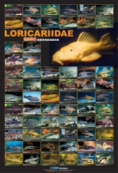 AZOO Plakat akwarystyczny AZ90164 Loricariidae