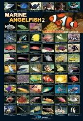 AZOO Plakat akwarystyczny AZ90174 Ryby morskie