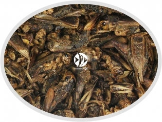 Świerszcz suszony - Pokarm naturalny dla ryb, żółwi, gadów i ptaków.