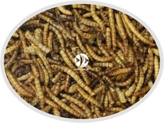 Larwa mącznika suszona - Pokarm naturalny dla ryb, żółwi, gadów i ptaków.