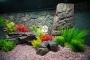 ATG Tło Płaskie (PL50x30) - Tło strukturalne do akwarium z motywem skalnym