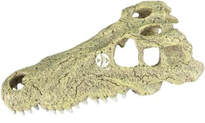 AQUA DELLA Aligator (234-443484) - Ręcznie malowana czaszka aligatora o wymiarach 28,5x14,5x8cm