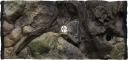 ATG Tło Amazonka (AM50x30) - Tło do akwarium z motywami korzeni i skał, imitujące biotop Amazonii. 60x30 cm