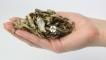 Stynka suszona - Naturalny pokarm dla dużych ryb mięsożernych, drapieżnych, piranii i żółwi.