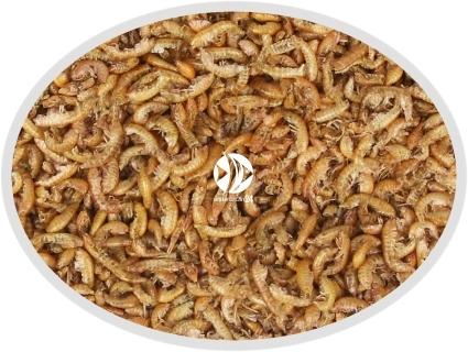 Gammarus suszony - Naturalny pokarm dla ryb, żółwi, gadów i ptaków.