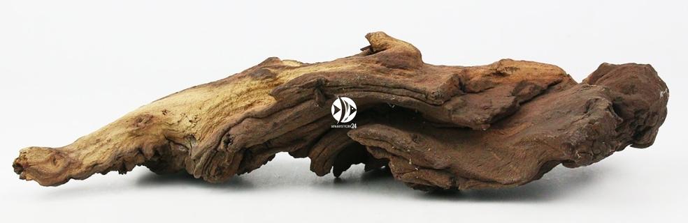 Korzeń Mopani 1kg - Piękne korzenie afrykańskiego drzewa Mopani