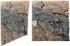 Slim Line Basalt/Gneiss 60A 50x55cm