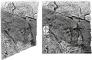 Back To Nature Slim Line River (03000110) - Płaskie tło modułowe z motywem skalnym do akwarium i terrarium 60A 50x55cm