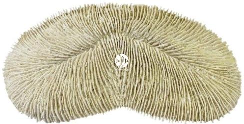 Back To Nature Herpolitha limax coral (03000190) - Ozdoba imitująca koralowiec do akwarium
