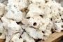 AQUAWILD Wapień Filipiński (HS3) - Drążona skała do akwarium