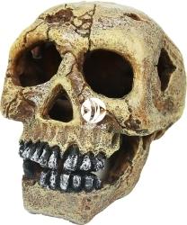 AQUA DELLA Skull-L (236-104309) - Czaszka, dekoracja do akwarium