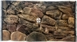 EKOL Tło Skała (SK50x30) - Tło do akwarium z motywem skał, imitujące biotopy bez roślin jak Malawi, Tanganika 100x50 cm
