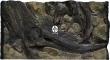 ATG Tło Amazonka (AM50x30) - Tło do akwarium z motywami korzeni i skał, imitujące biotop Amazonii. 100x60 cm