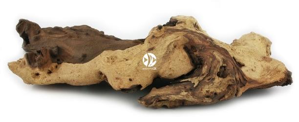 Korzeń Mopani 1szt - Korzeń afrykańskiego drzewa Mopani