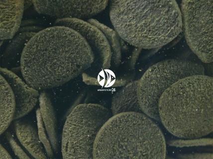 SERA Wels-Chips (00510) - Specjalny pokarm dla ryb akwariowych zwłaszcza glonojadów i sumików