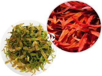 ROŚLINY IN-VITRO Ammania Senegalensis - Roślina o pomarańczowo czerwonych liściach
