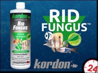 KORDON RID FUNGUS 473ml