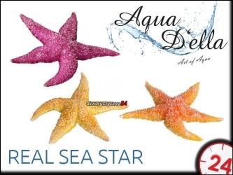 AQUA DELLA REAL SEA STAR [234-421000] | Ręcznie malowana gwiazda wodna do akwarium