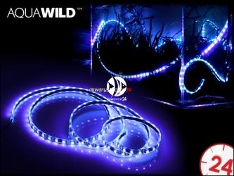 Oświetlenie Nocne Led Do Akwarium Akwarystyczny24pl