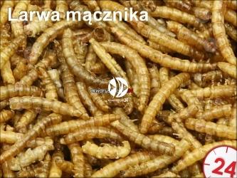Suszona larwa mącznika - Do karmienia ryb, żółwi, gadów i ptaków.