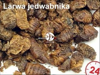 Suszona larwa jedwabnika 1kg | Do karmienia ryb, żółwi, gadów i ptaków.