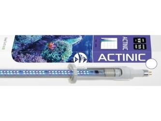 AQUAEL LEDDY TUBE RETROFIT ACTINIC 16W 820-950mm (114579) | Świetlówka Led do pokryw akwariowych 85-90cm, dobra dla koralowców